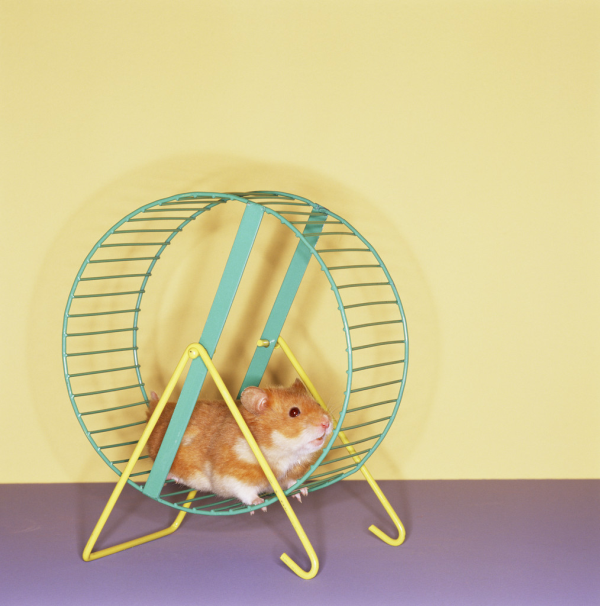 data automation can get you off the hamster wheel