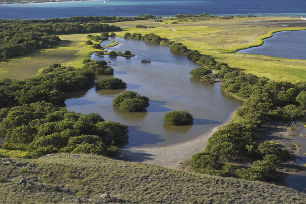 The biodiversity of this wetland affects your sustainability reporting.